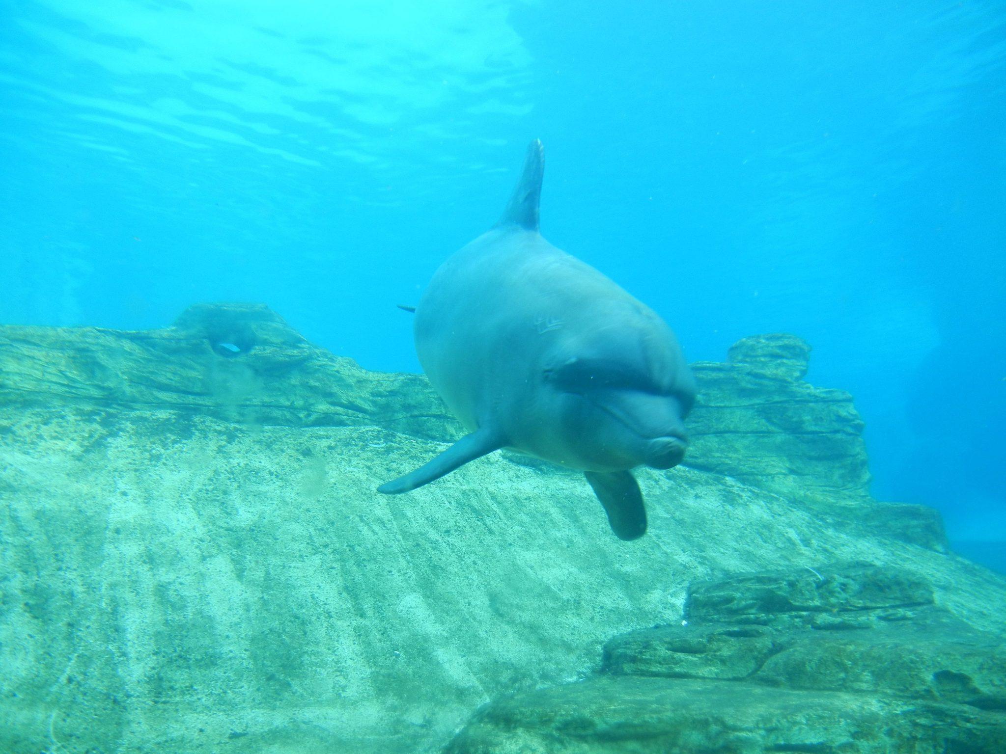 Dolphin at Sentosa